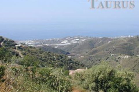 0 bedrooms Land for sale in Sayalonga