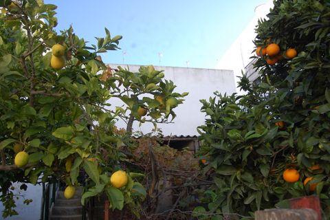 3 habitacions Casa en ciutat per vendre en Vejer De La Frontera